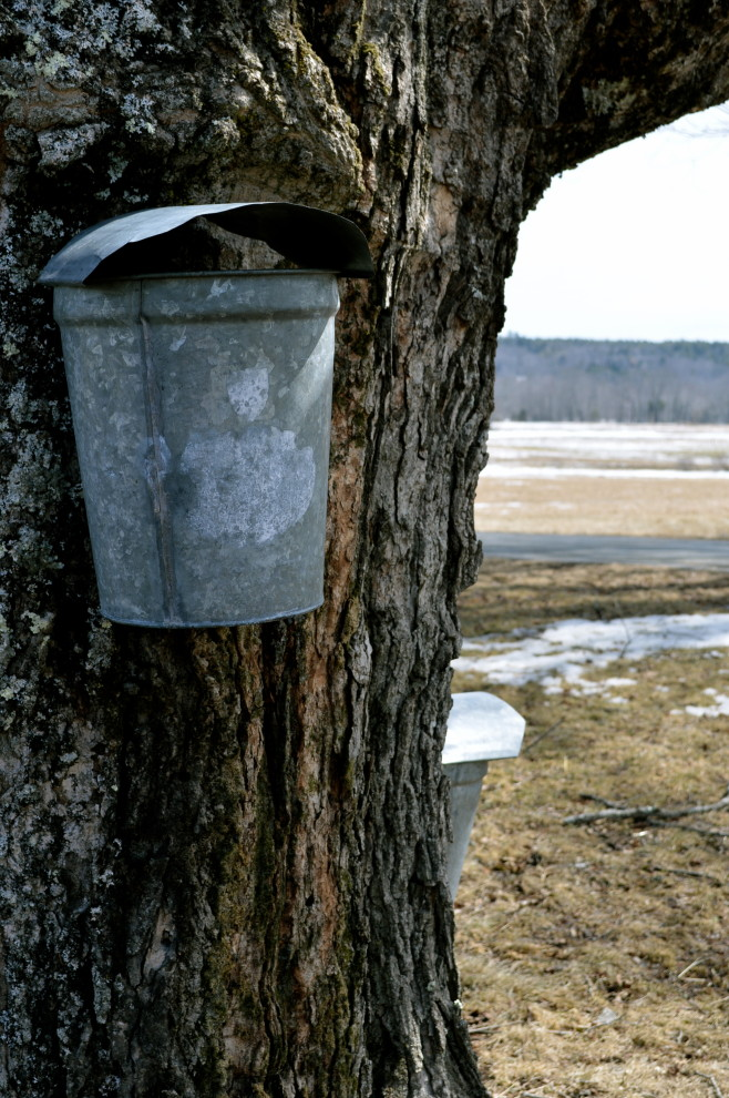 Bucket on a tree